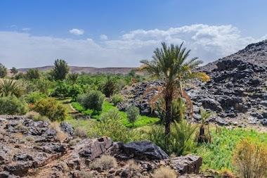 l'oasis de Sidi Flah fait partie des oasis oubliées