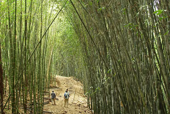 Arsitektur bambu