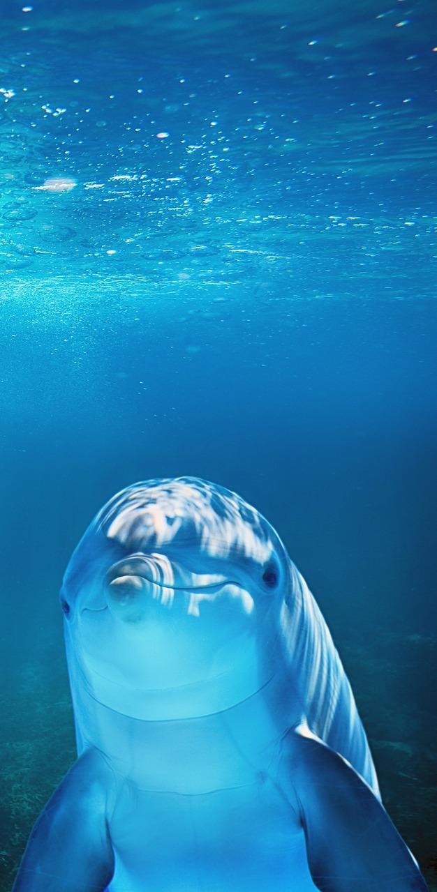 A dolphin underwater.
