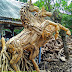 Teak Root Animals