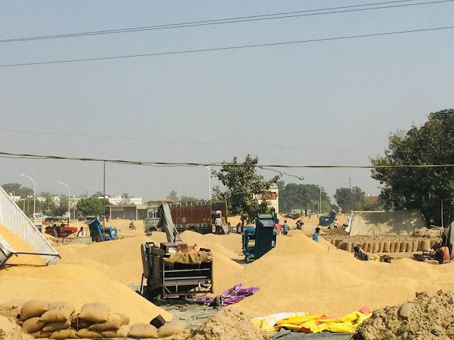 Madhya Pradesh wheat