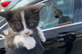 Kitten trapped under vehicle goes through car wash before rescue