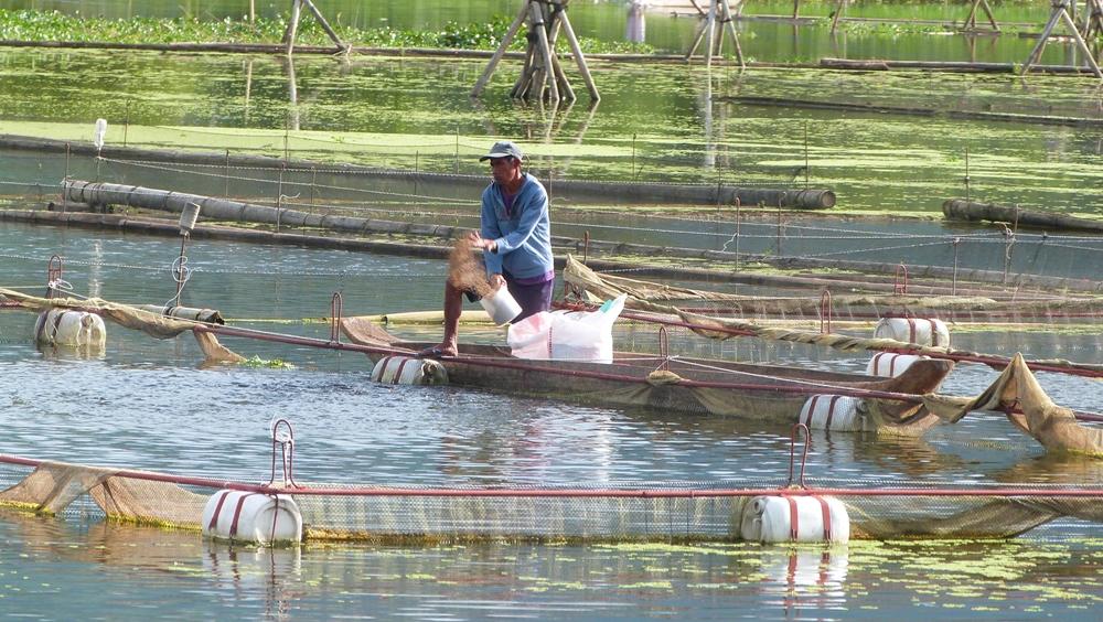 Fish Feeding in Lake Seloton