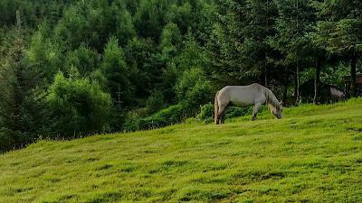 Wallpaper free horse, grass, field, trees