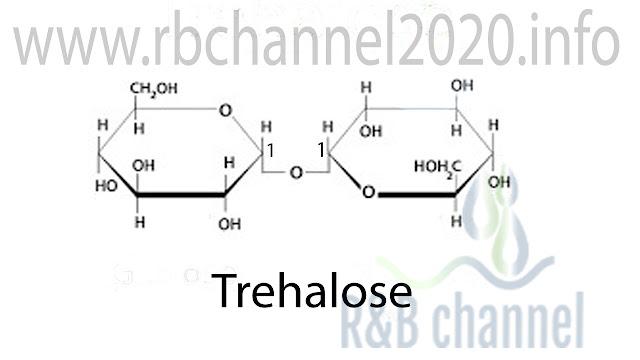 الترهالوز Trehalose