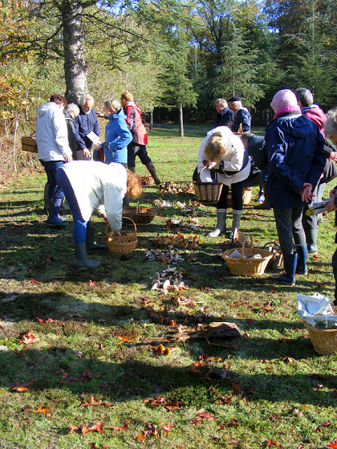 Participants on a fungi foray laying out the specimens collected to be identified.  Indre et Loire, France. Photographed by Susan Walter. Tour the Loire Valley with a classic car and a private guide.