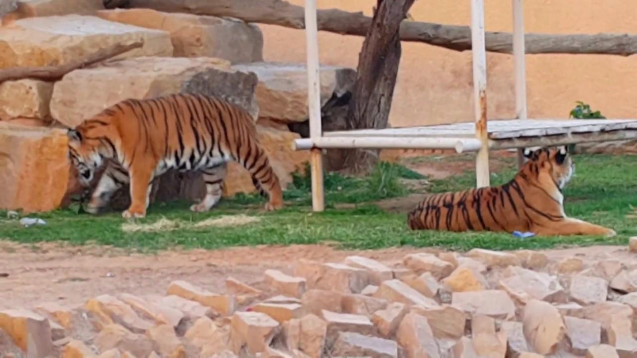 أفضل 5 أنشطة في حديقة الحيوانات بالرياض 2020 - روائع السفر
