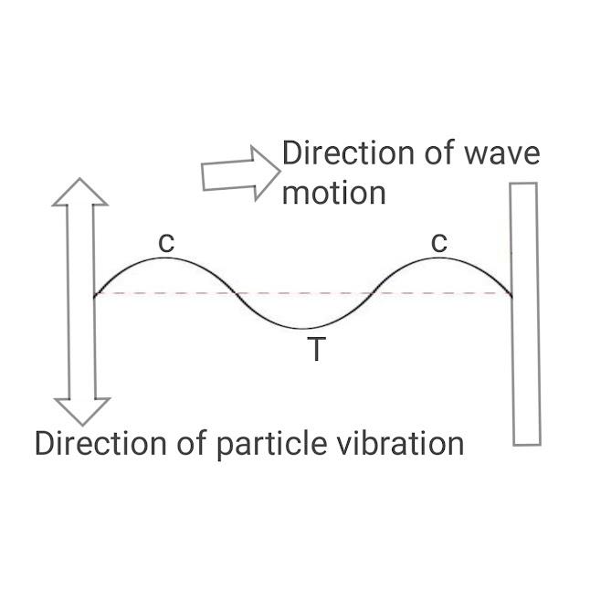 Transverse wave motion