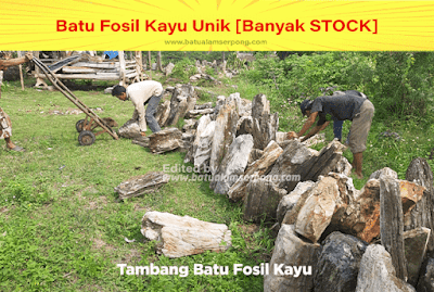 jual batu fosil kayu ditangerang jakarta
