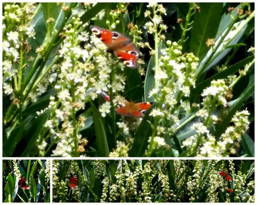 Nunu S Garn Und Stofflabor Schmetterling Du Kleines Ding