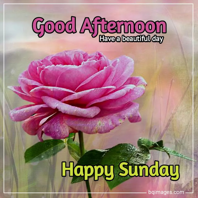 good afternoon happy sunday pictures