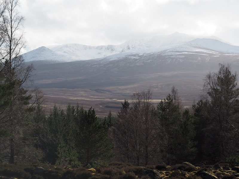 Snowy Lochnagar - view from the Balmoral cairns walk