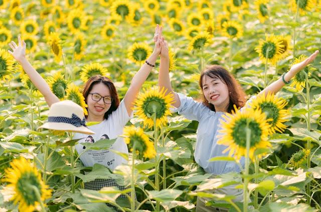 Thiếu nữ Hà Nội khoe lưng trần, eo thon ở cánh đồng hoa hướng dương