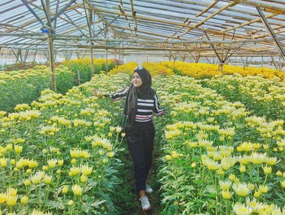 Wisata instagrammable Flower Farm Setiya Aji