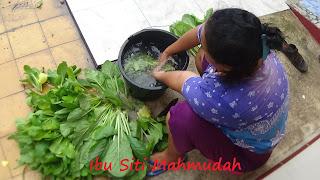 Budidaya Caisim di Pekarangan Panen untuk Tambahan Uang Belanja Dapur