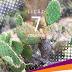 Lição 7 - Os Perigos do Deserto