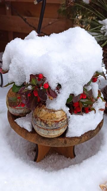 co posadzić w ogrodzie wiosną i latem