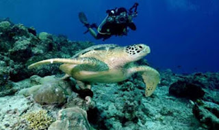 Diving with Turtles In Durai Island - Anambas - Indonesia