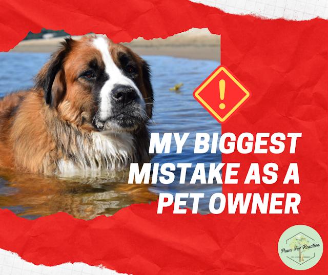 My biggest regret as a pet owner: I should have purchased pet insurance for Hazel