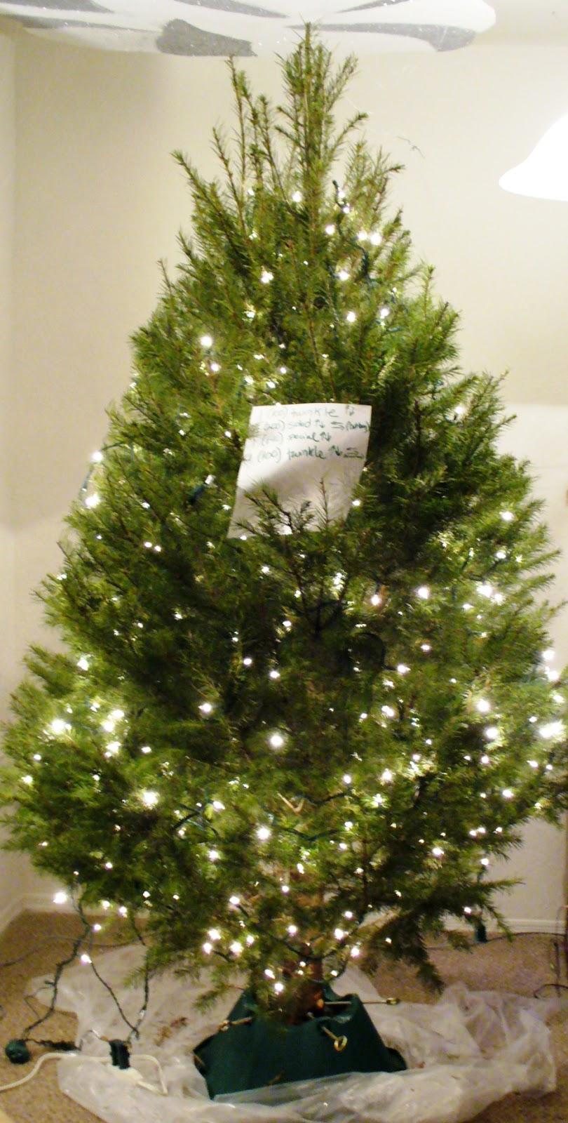 How To Hang Your Christmas Tree Lights