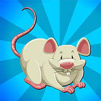 AvmGames Crazy Rat Escape