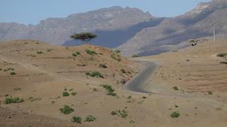 piasek, pustynia, jedno drzewo
