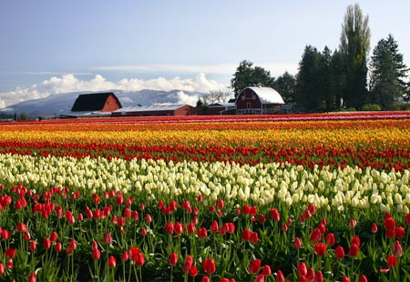 The Skagit Valley, Washington State