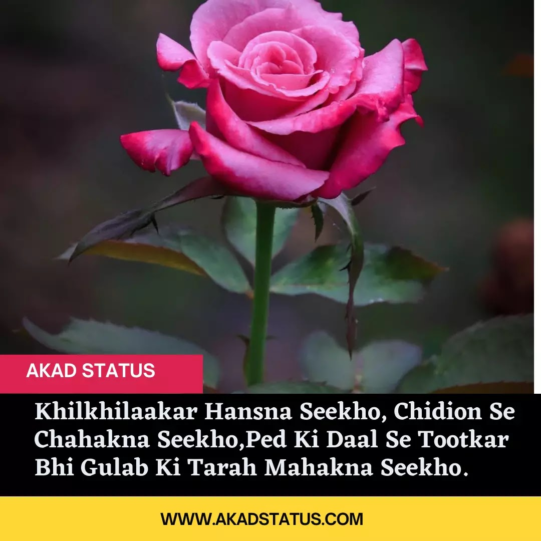 World rose day shayari images, Cancer World Rose Day quotes, World rose day images