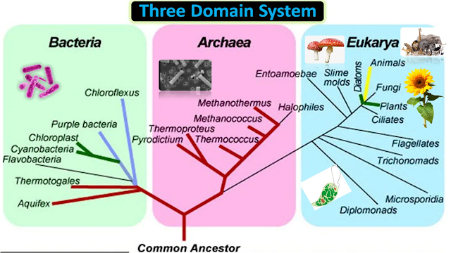 Three Domain Classification by Carl Woese