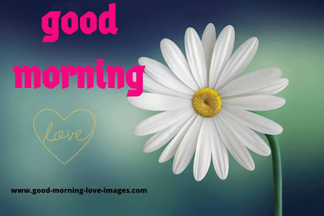 Good morning love images with flowers