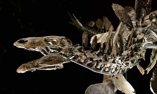 dinozaur tyreoforański