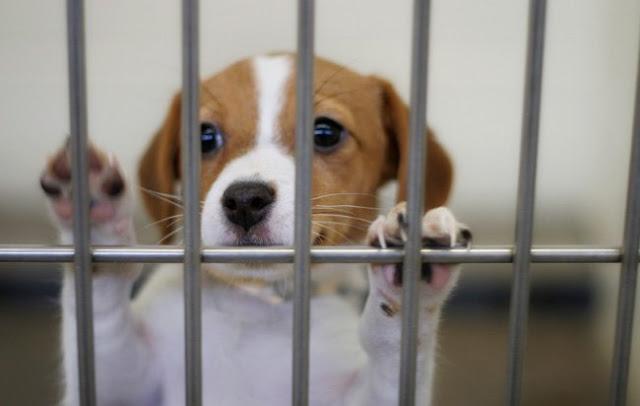 Ανδριανός: Υπεγράφη η ένταξη του έργου κατασκευής καταφυγίου αδέσποτων ζώων στην Ερμιονίδα