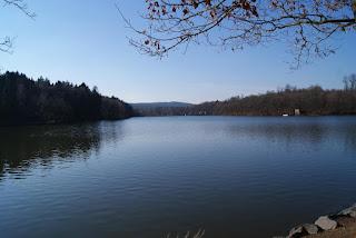 Ein See. Am oberen Bildrand hängt ein Ast, im Hintergrund ist der See von Wald umrahmt