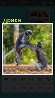 происходит драка между двух обезьян на поляне игра 667 слов