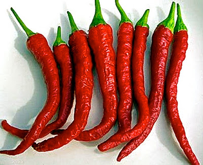 ingredient kashmiri mirch indian chili red spice