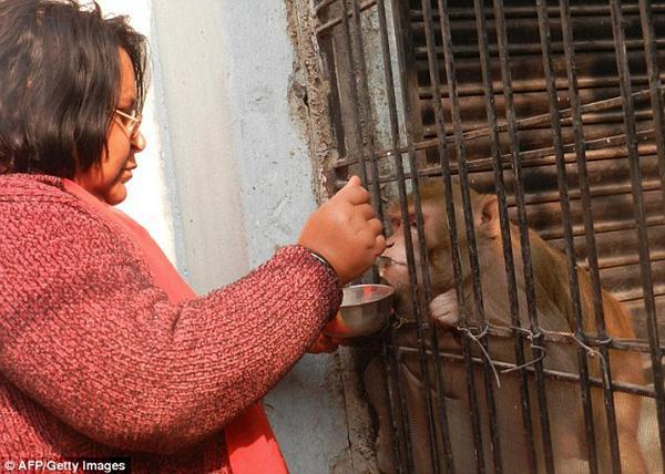 Cặp vợ chồng giàu có để lại toàn bộ tài sản cho khỉ