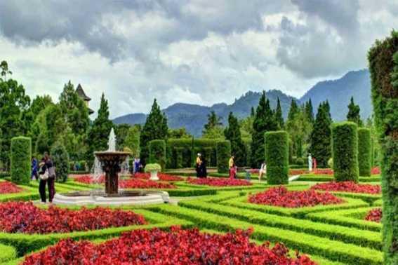Kebun Begonia Lembang Bandung