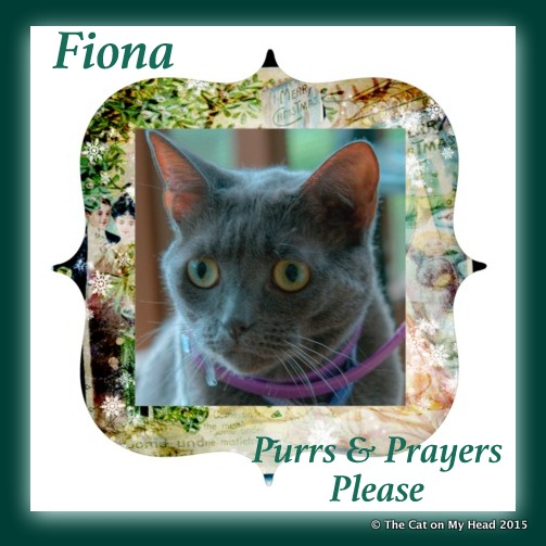 Purrs for Fiona