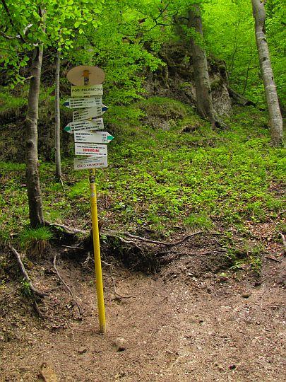 Pod Pálenicou (910 m n.p.m.).