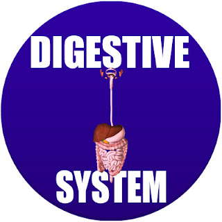 digestive system in spanish