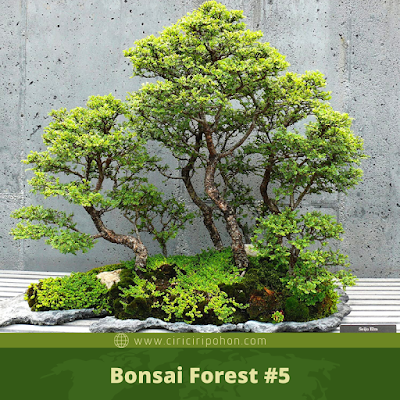 Bonsai Forest #5