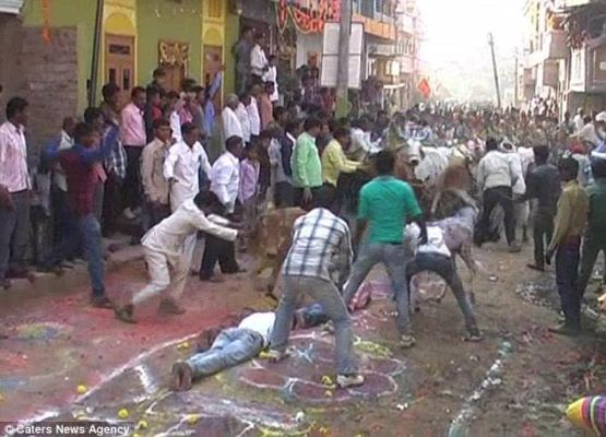 Men volunteer to be trampled by cows in the belief it brings goodluck (see photos)