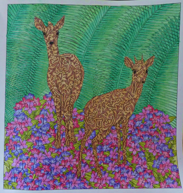 Hidden in the Jungle coloring book deer