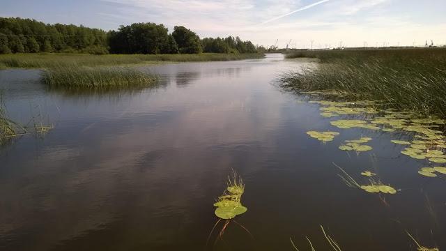 Jokisuistomaisemaa, jossa kasvaa järviruokokasvillisuutta