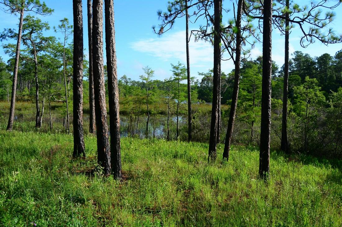 sandhill crane reserve Mississipi