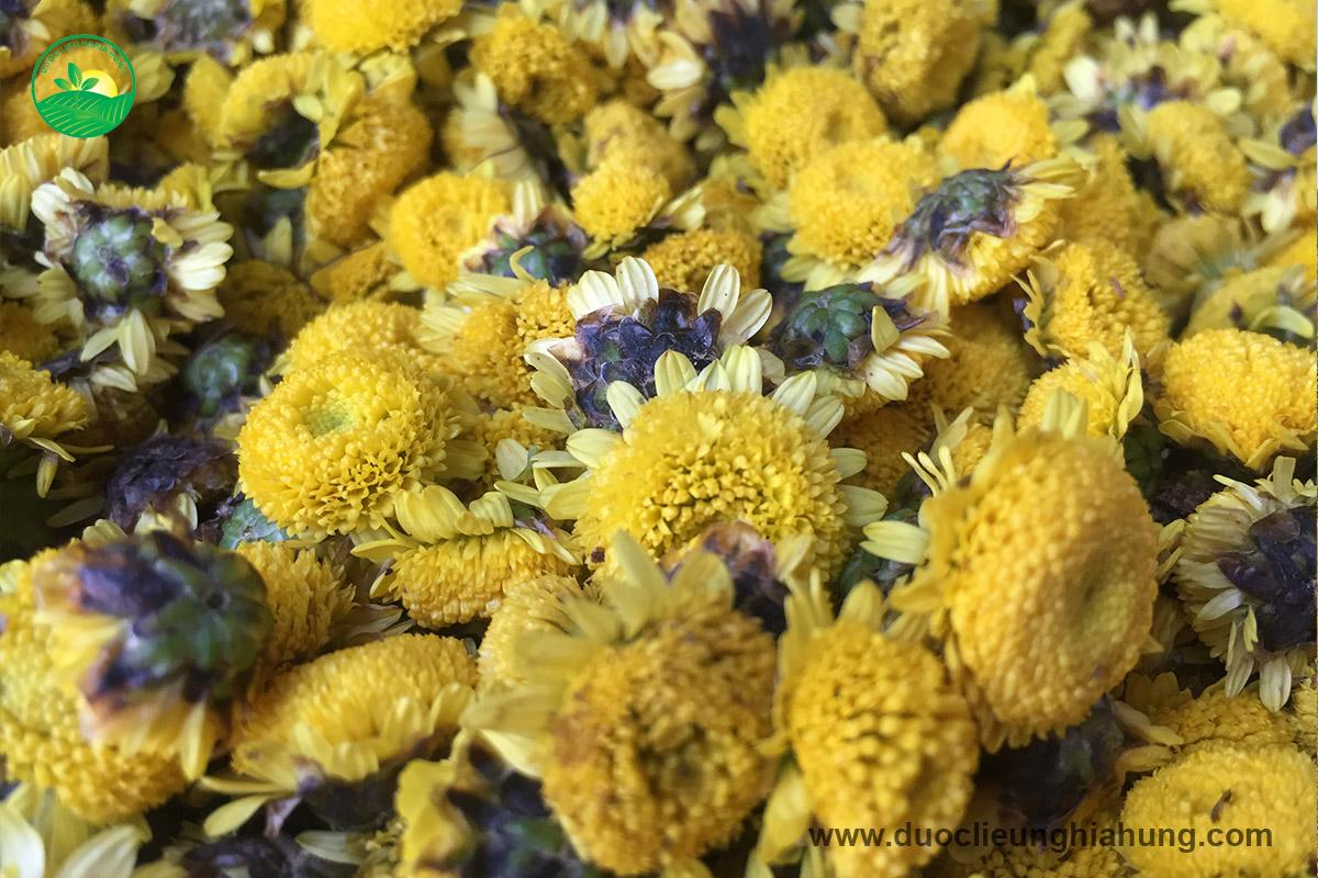 Dược liệu cúc hoa vàng sấy lạnh