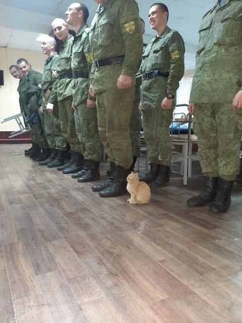 Cat in Army meme