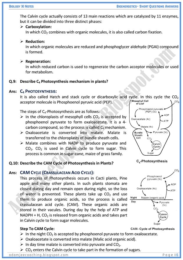 bioenergetics-short-question-answers-biology-11th