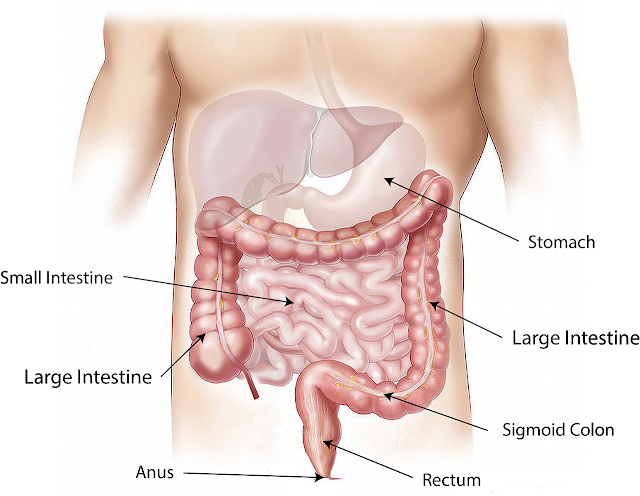 How to Strengthen the Digestive System