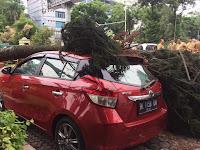 Gubraaaak!!! Dua Mobil Tertimpa Pohon di Depan Kantor Walikota